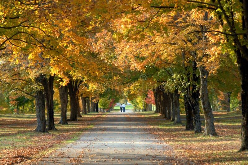 Avenida debajo de los árboles fotos de archivo