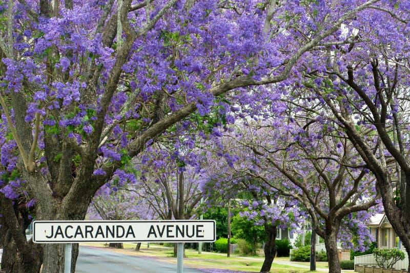 Avenida do Jacaranda fotografia de stock