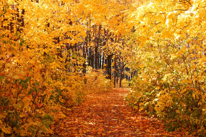 Avenida do outono foto de stock
