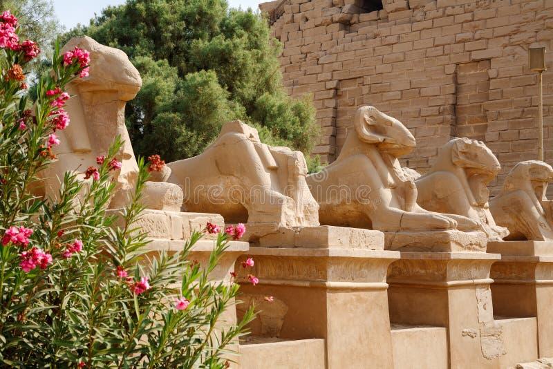 Avenida dos Sphinxes. Luxor, Egipto imagem de stock