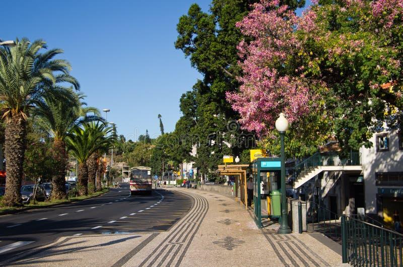 Avenida estropea, Funchal, Madeira. foto de archivo