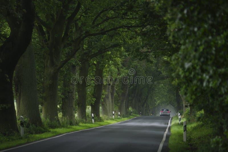 Avenida molhada fotos de stock royalty free