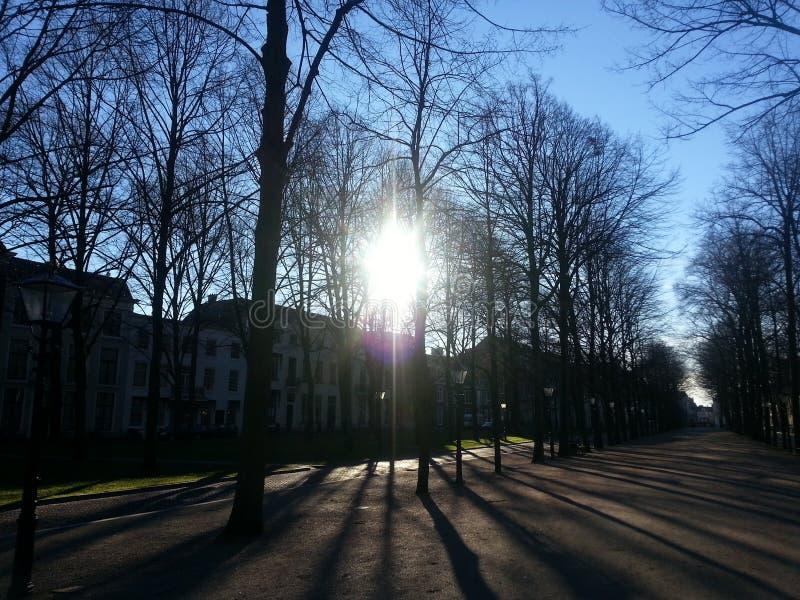 Avenida na luz solar foto de stock royalty free