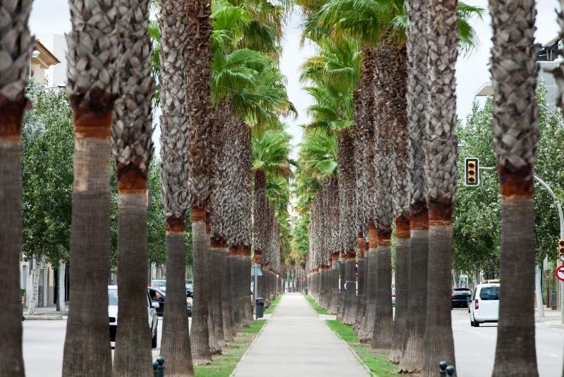 A avenida neverending com palmas imagem de stock