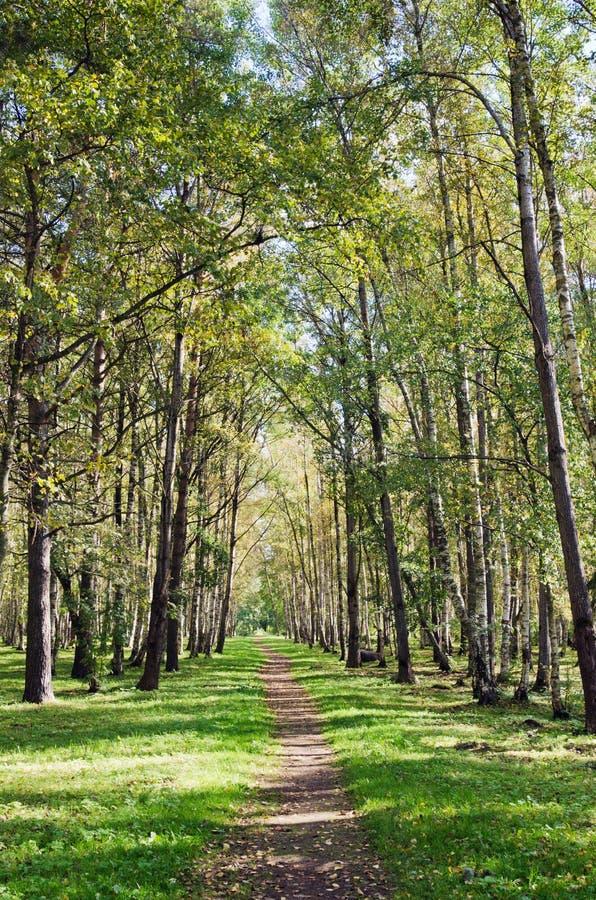 avenida no parque do outono imagens de stock