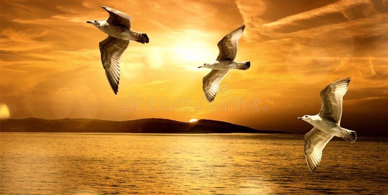 Aventura das gaivota imagens de stock