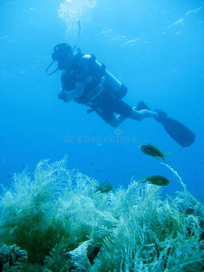 Aventura tropical do mergulho autónomo fotografia de stock