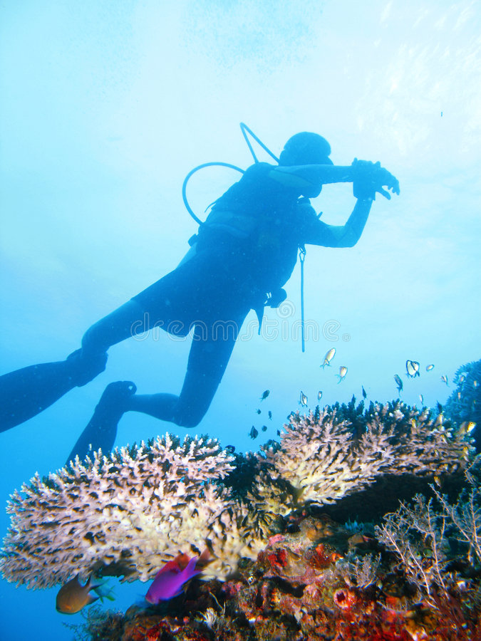Aventura tropical do mergulho autónomo fotos de stock royalty free