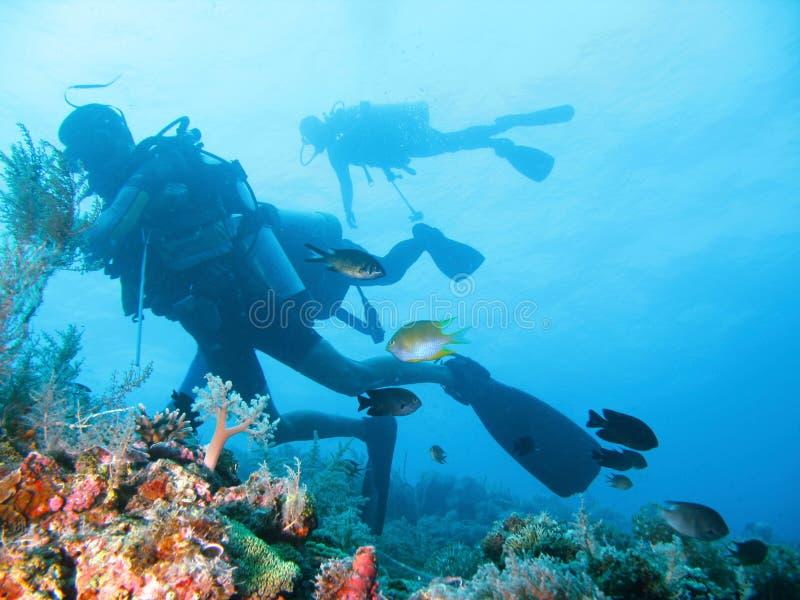 Aventura tropical do mergulho autónomo foto de stock