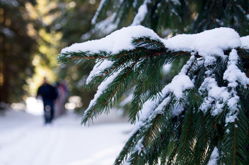Aventuras del invierno Bosque Cárpatos Nevado ucrania foto de archivo
