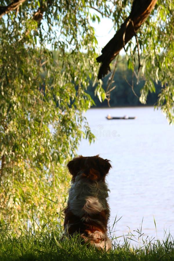 Aventuras del Riverbank foto de archivo libre de regalías