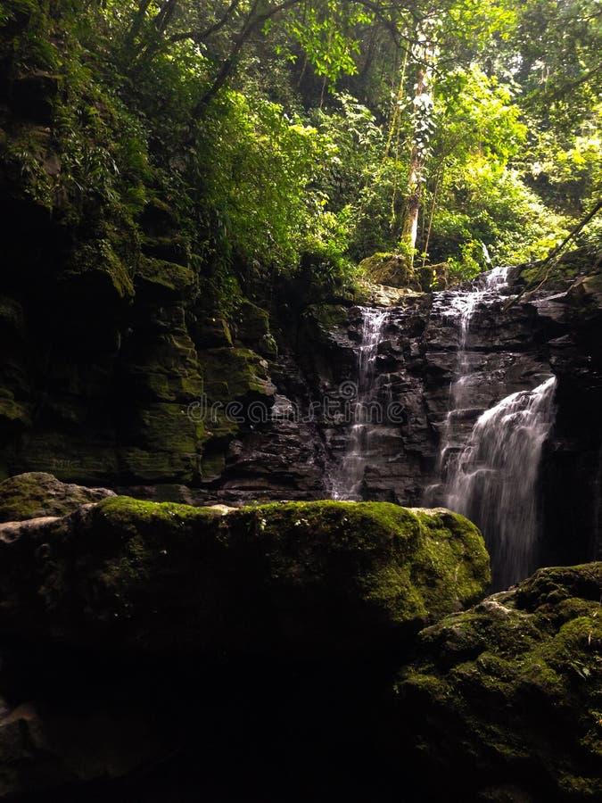 Aventure dans la jungle images stock