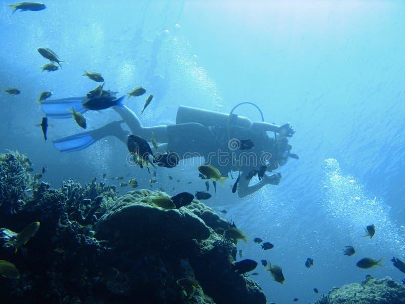 Aventure de plongée à l'air photos libres de droits
