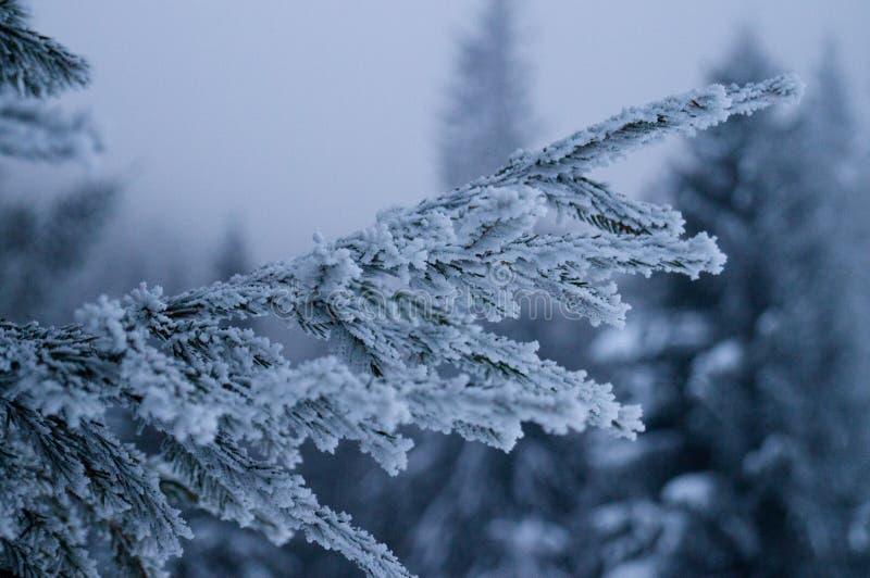 Aventures d'hiver Forêt Carpathiens de Milou l'ukraine photo stock