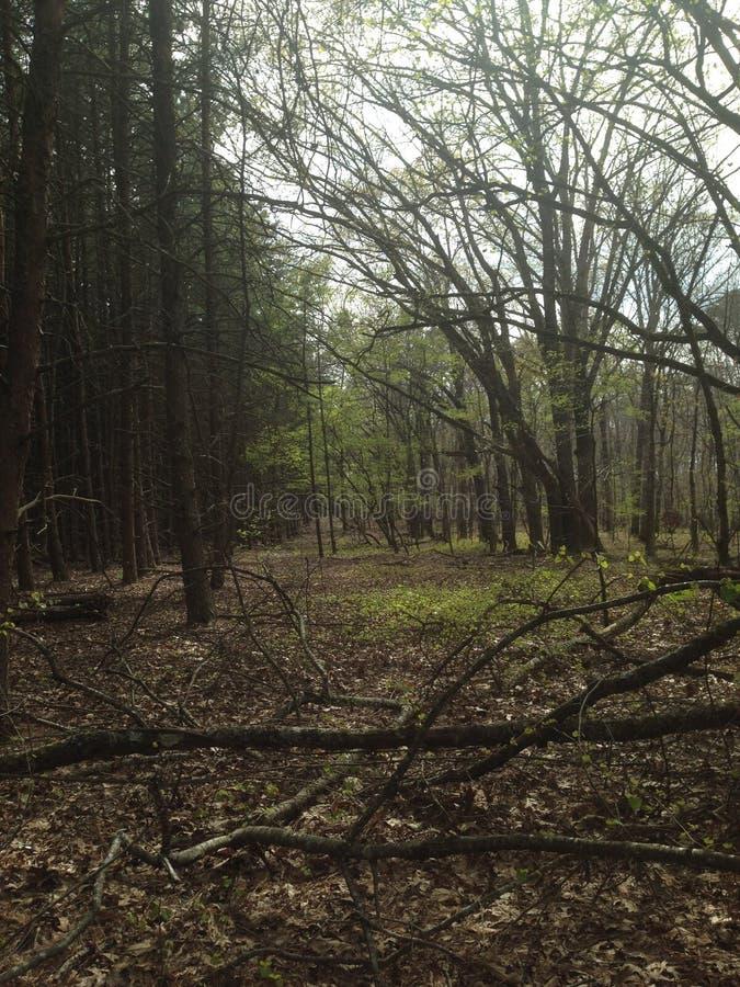 Aventures de Woodline image libre de droits