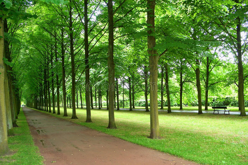 Download Avenue stock image. Image of trees, road, rest, green - 17305149