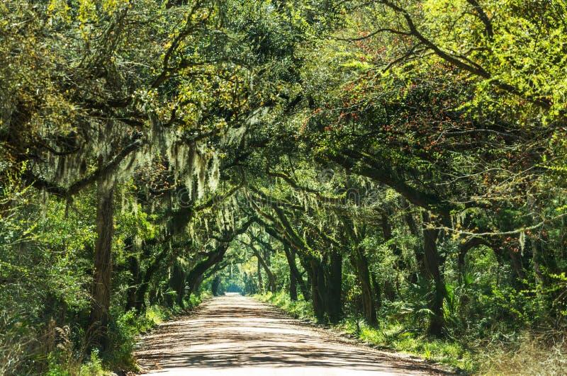 avenue zdjęcie royalty free