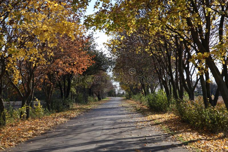 avenue zdjęcia stock
