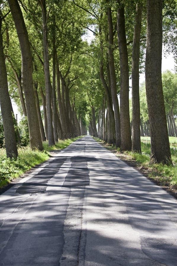 Avenue, Belgique image libre de droits