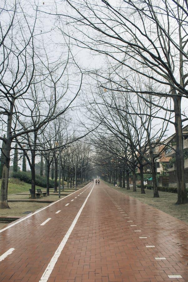 Avenue with bike path on a rainy day stock photo