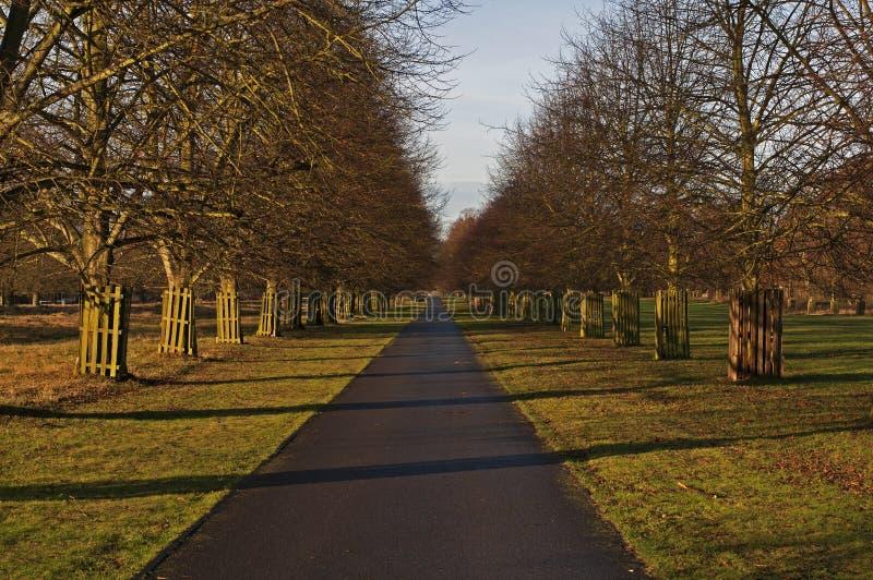 The Avenue, Bushy Park royalty free stock photography