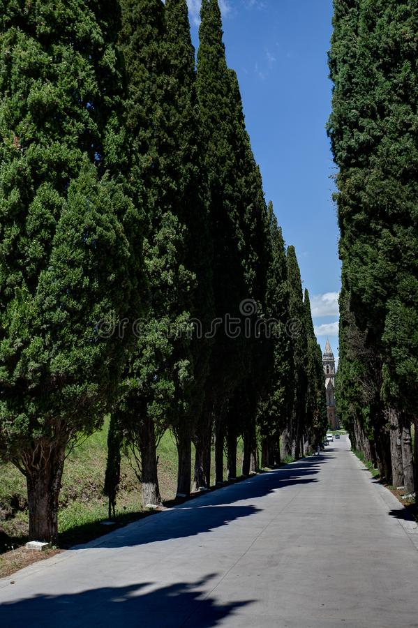 Avenue cypress Montepulciano, Tuscany, Italy. Straight line of cypresses at an avenue in the landscape of Montepulciano in Tuscany, Toscana, Italy, Italia stock image