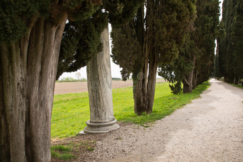 Avenue of Cypress trees in Aquileia, Italy royalty free stock photos