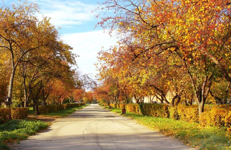 Avenue d'automne photographie stock libre de droits