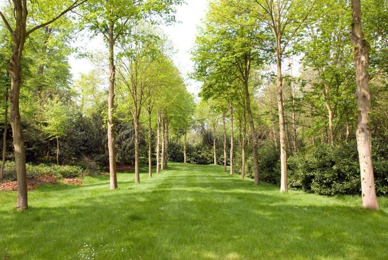 Avenue d'herbe rayée par arbre photographie stock libre de droits