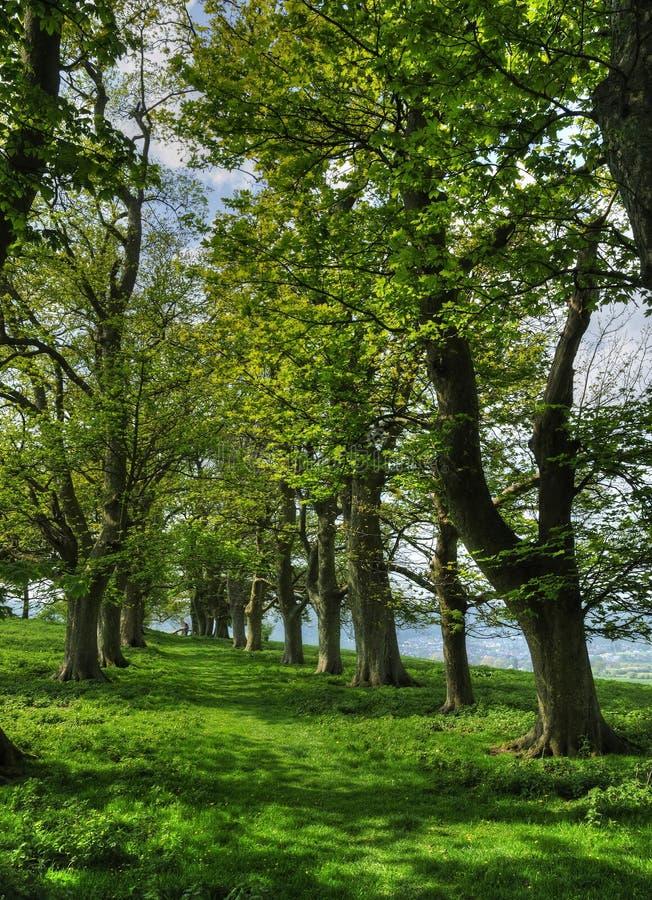 Avenue des arbres photos stock
