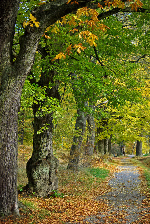 Download Avenue with dirt road stock image. Image of footpath - 11210803