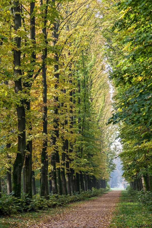 Avenue of Elm trees in Parco di Monza stock photo