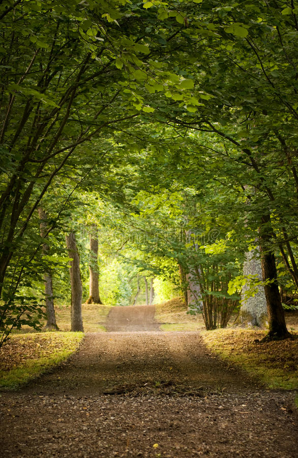 Download Avenue in park stock image. Image of track, footpath - 12894725