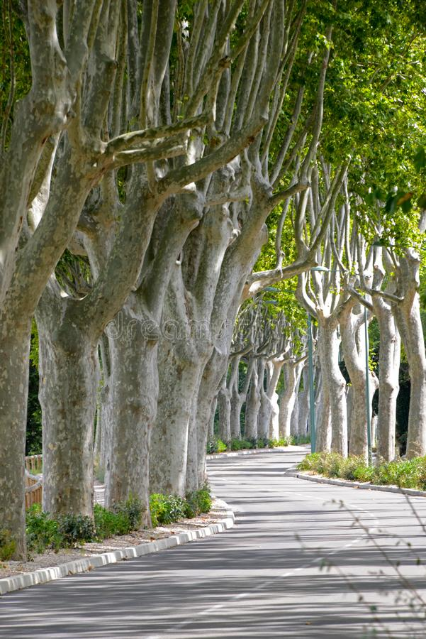 avenue obraz royalty free