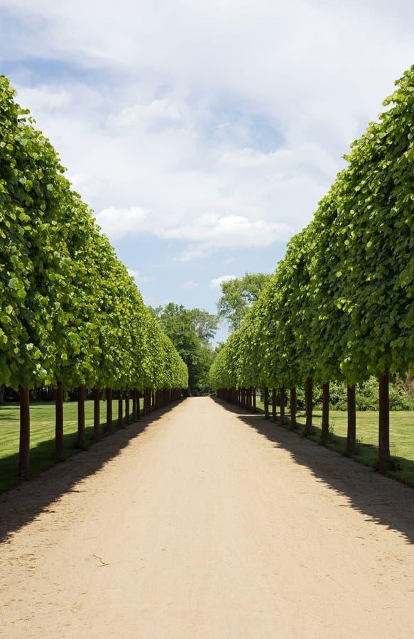Avenue. In a public park (castle garden in Dieburg in Germany stock image