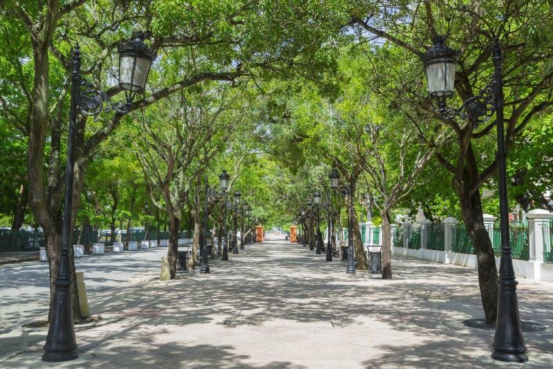 Avenue rayée par arbre photo stock
