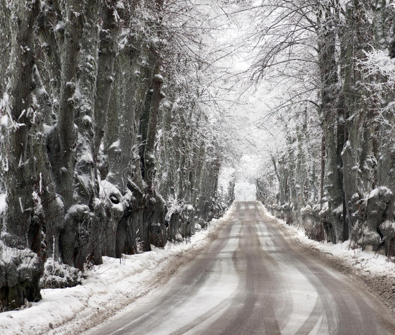 Avenue in snow royalty free stock image