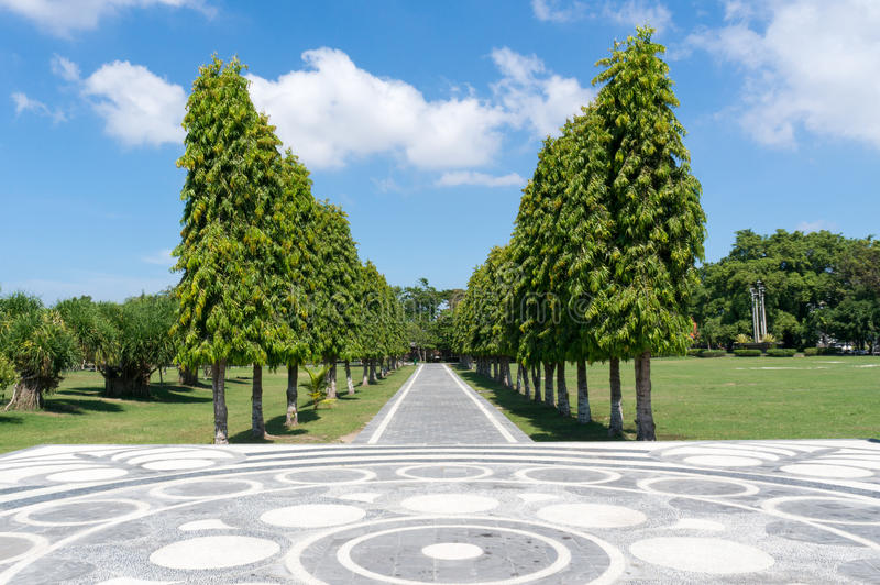 Avenue with tall trees in Denpasar stock photography
