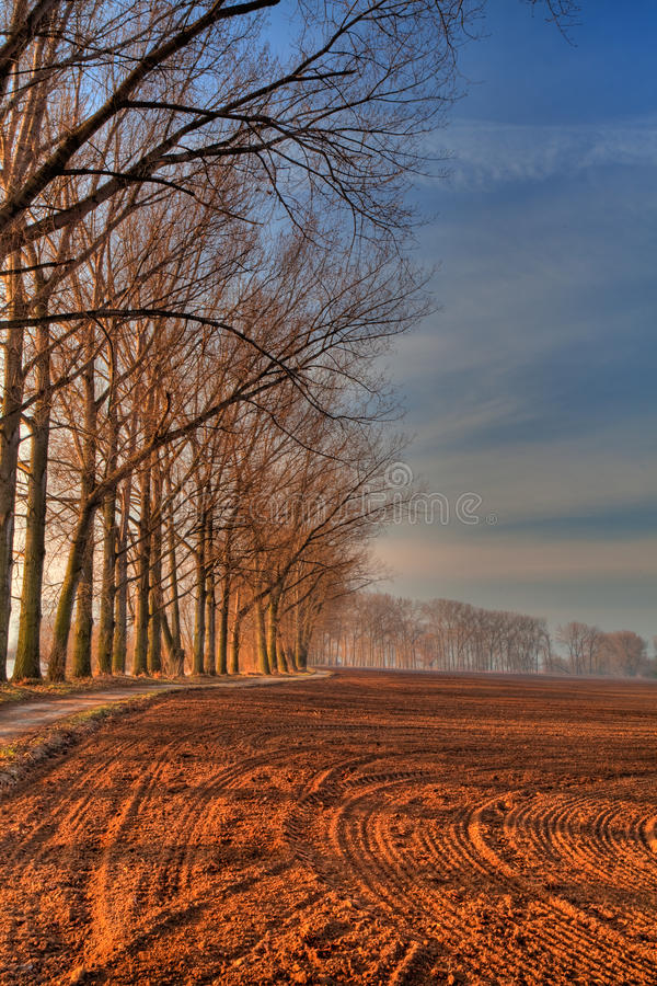 Download Avenue Of The Trees stock photo. Image of farming, fine - 16162636