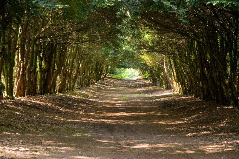 Avenue Of Trees royalty free stock photos