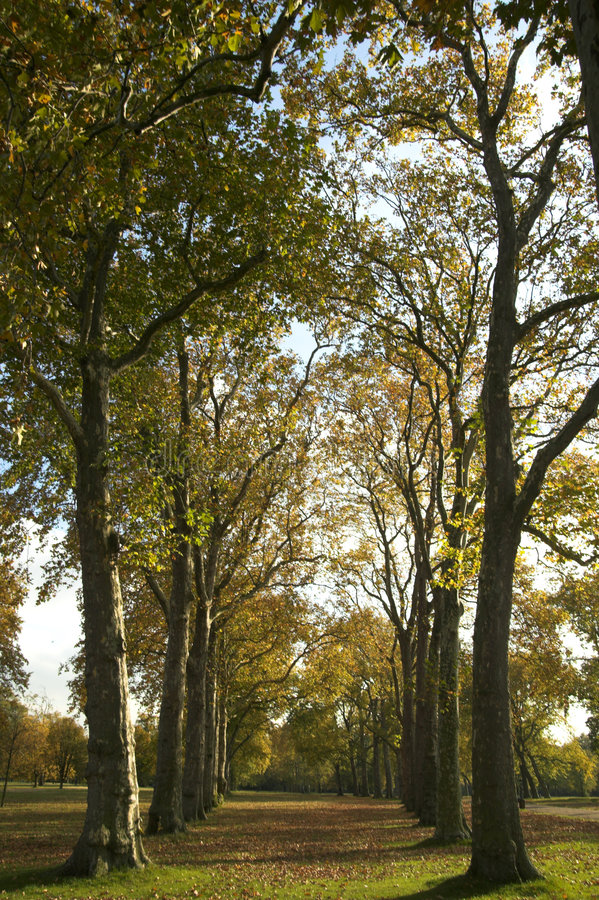 Download Avenue Of Trees stock photo. Image of deciduous, woodland - 3456488