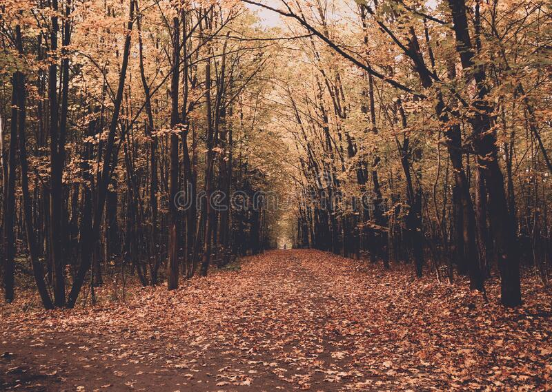 Avenue between trees in Autumn royalty free stock images
