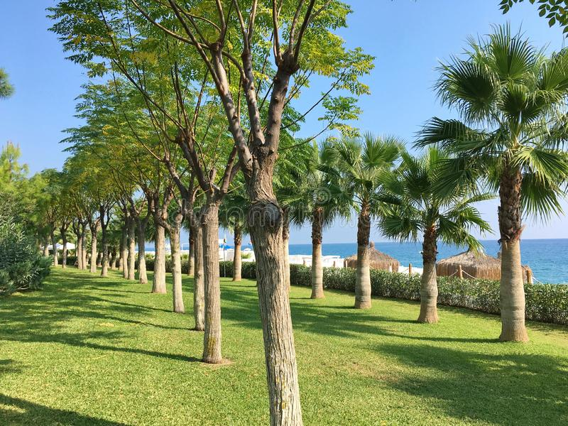 Avenue of trees on a green lawn. Along the blue sea, palm trees and deciduous trees stock photo