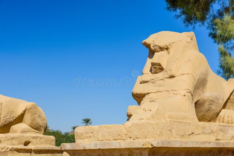 Aveny av deh?vdade sfinxerna i en Karnak tempel egypt luxor arkivfoto