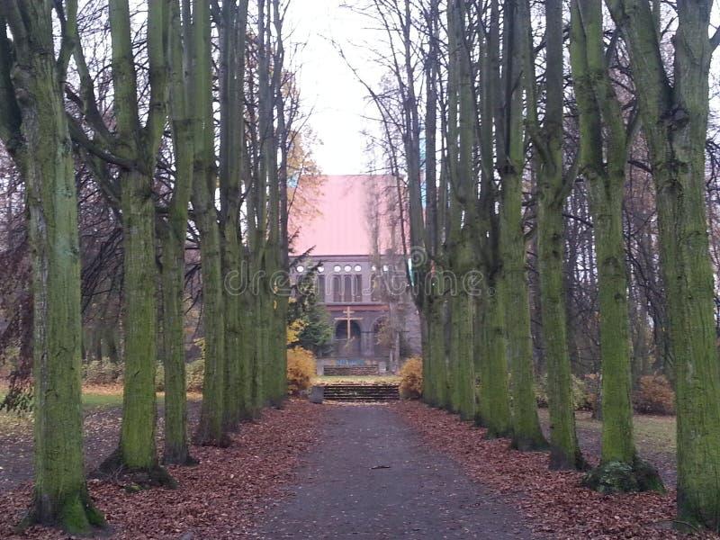 Aveny av gamla träd som leder till kyrkan arkivbild