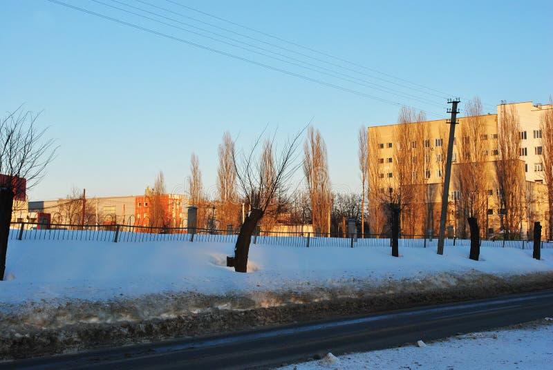Aveny av klippta träd och trådar längs väg- och stadslandskap med hyreshusar på horisonten, vinter royaltyfri fotografi