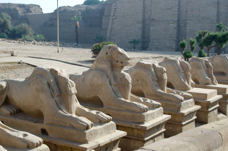 Aveny av sfinxer i polisdistriktet av Amun-beträffande (det Karnak tempelkomplexet, Luxor, Egypten) royaltyfri fotografi