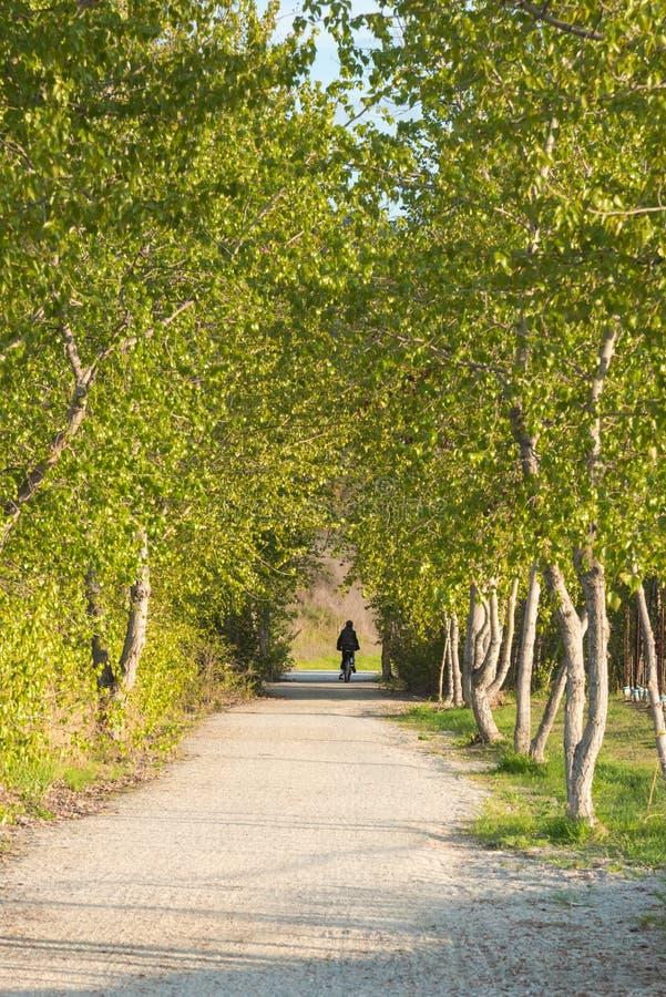Aveny av träd längs slinga med cyklisten arkivfoton