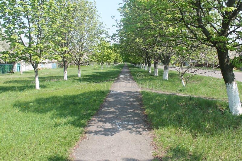 Aveny av trees royaltyfri foto