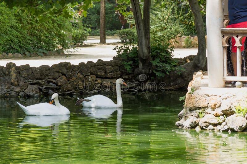 Aves acuáticas en los lagos Maria Luisa Park en la capital andaluz, Sevilla en España foto de archivo libre de regalías